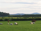 Cheviot Hill from Springhill